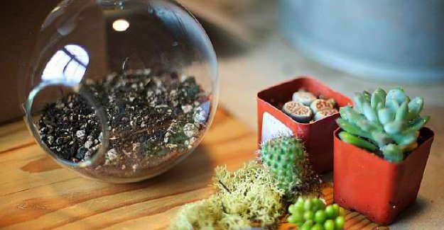 easy-diy-project-how-to-make-succulent-terrarium-